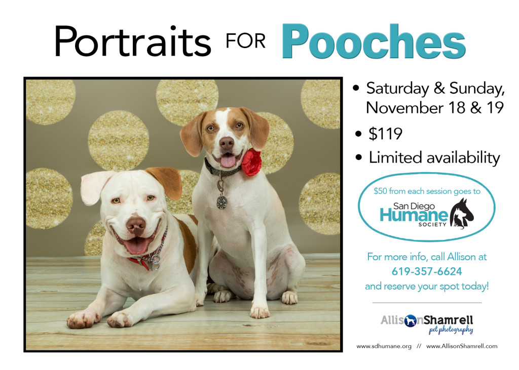 dog photo fundraiser flyer