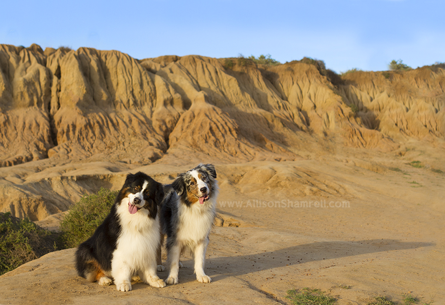 san diego cliffs and dogs