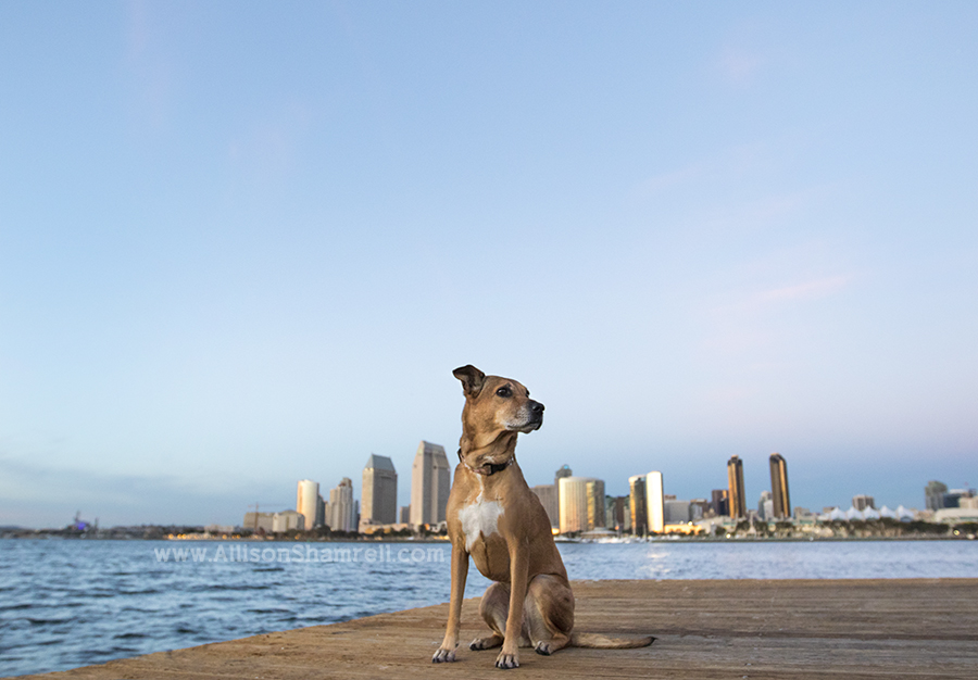 san diego dog picture