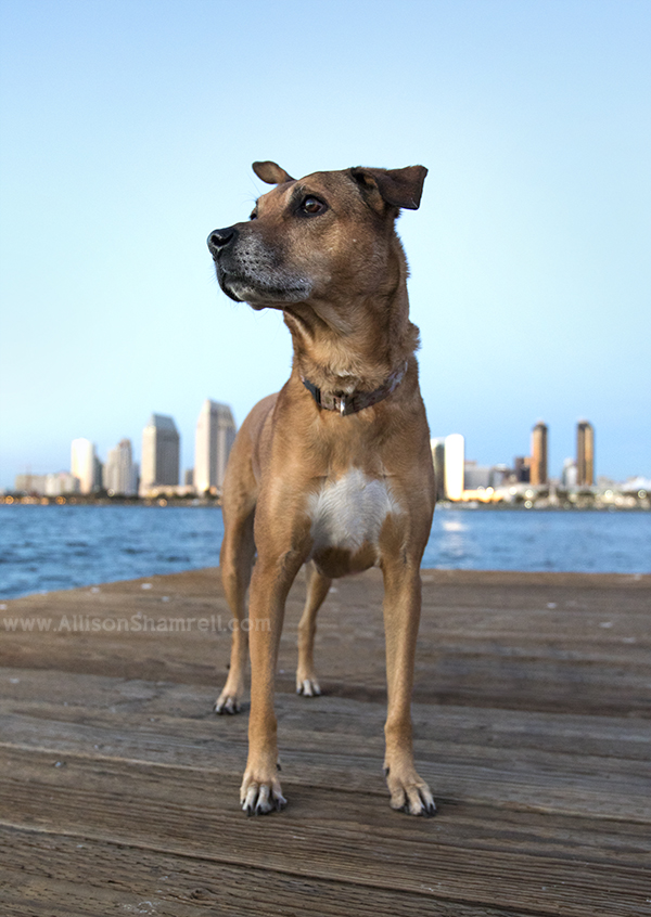 san diego dog skyline
